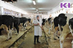 Выделение помощи для покупки дойных коров от государства начинающих фермеров
