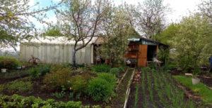 Размер участка при коллективном садоводстве