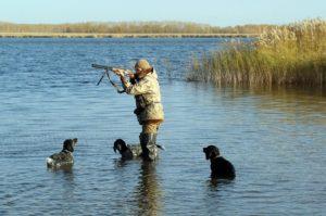 До какого времени можно охотиться на водоплавающую дичь осенью