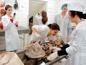 В каком возрасте анатомирование умершего человека не обязательно